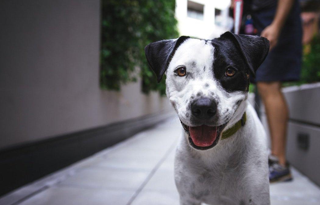 Scheiden en huisdieren, is er een omgangsregeling voor de hond?